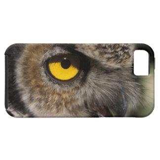 great horned owl, Stix varia, Alaska Zoo, iPhone 5 Case