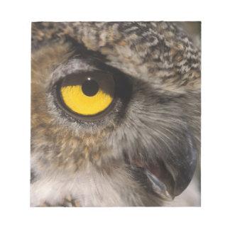 great horned owl, Stix varia, Alaska Zoo, Notepad