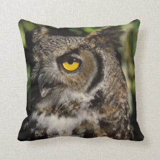 great horned owl, Stix varia, in the Anchorage Cushion