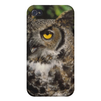 great horned owl, Stix varia, in the Anchorage iPhone 4/4S Cover