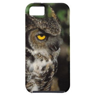 great horned owl, Stix varia, in the Anchorage iPhone 5 Cover