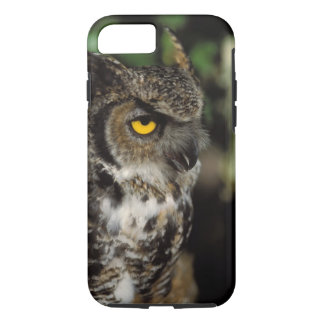 great horned owl, Stix varia, in the Anchorage iPhone 8/7 Case