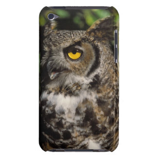 great horned owl, Stix varia, in the Anchorage iPod Touch Covers