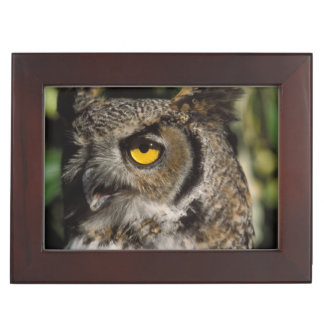 great horned owl, Stix varia, in the Anchorage Keepsake Box
