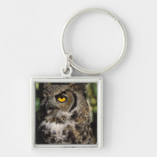great horned owl, Stix varia, in the Anchorage Key Ring