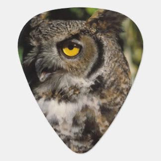 great horned owl, Stix varia, in the Anchorage Plectrum