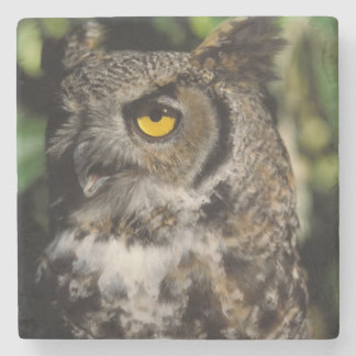 great horned owl, Stix varia, in the Anchorage Stone Coaster