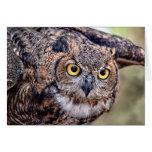 Great Horned Owl Taking Flight