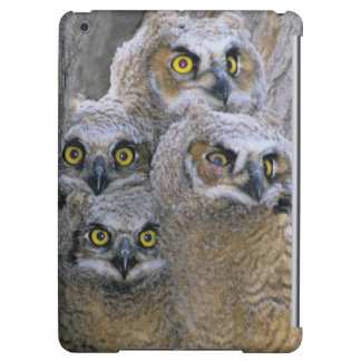 Great Horned Owlets (Bubo virginianus) nest in a