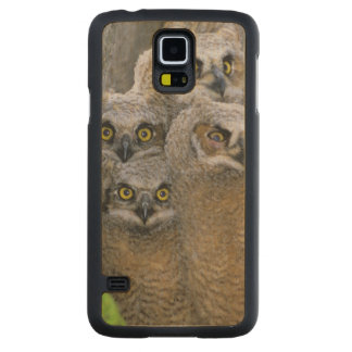 Great Horned Owlets (Bubo virginianus) nest in a Carved Maple Galaxy S5 Case