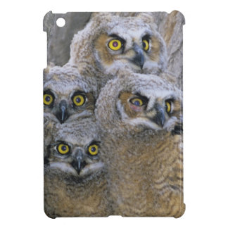 Great Horned Owlets (Bubo virginianus) nest in a iPad Mini Cases