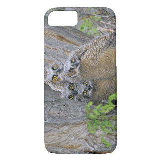Great Horned Owlets (Bubo virginianus) nest in a iPhone 8/7 Case