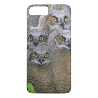 Great Horned Owlets (Bubo virginianus) nest in a iPhone 8 Plus/7 Plus Case