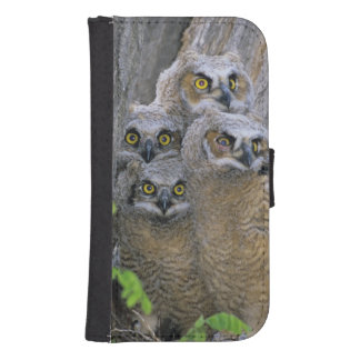 Great Horned Owlets (Bubo virginianus) nest in a Samsung S4 Wallet Case