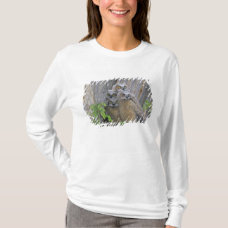 Great Horned Owlets (Bubo virginianus) nest in a T-Shirt
