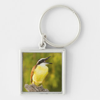 Great Kiskadee calling from perch Silver-Colored Square Key Ring