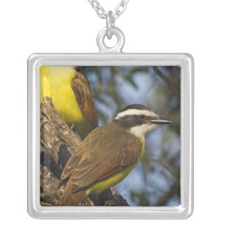 Great Kiskadee Pitangus sulphuratus) adults Silver Plated Necklace