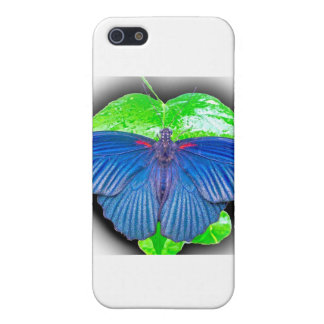 Great Mormon Butterfly iPhone 5 Cases