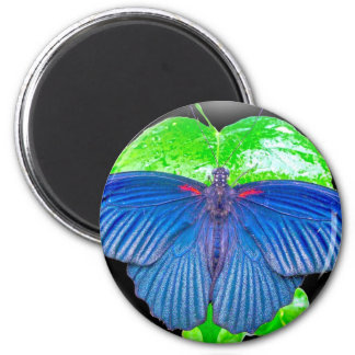 Great Mormon Butterfly Magnets