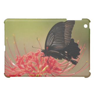 Great Mormon (Papilio memnon) on flower, Chiba iPad Mini Cases