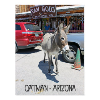 Great Oatman Postcard! Postcard