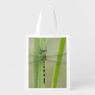 Great Pondhawk , Erythemis vesiculosa, adult