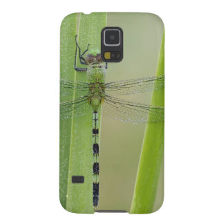 Great Pondhawk , Erythemis vesiculosa, adult Galaxy S5 Cover