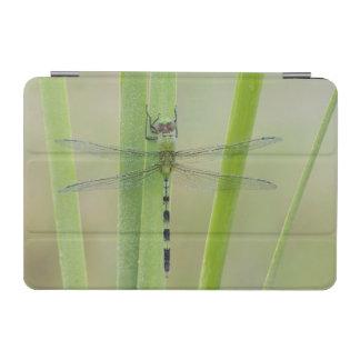 Great Pondhawk , Erythemis vesiculosa, adult iPad Mini Cover