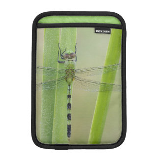 Great Pondhawk , Erythemis vesiculosa, adult iPad Mini Sleeve
