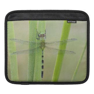 Great Pondhawk , Erythemis vesiculosa, adult iPad Sleeve