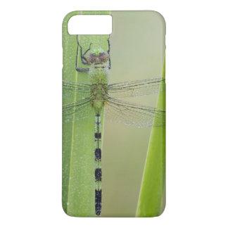 Great Pondhawk , Erythemis vesiculosa, adult iPhone 8 Plus/7 Plus Case