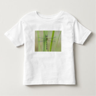 Great Pondhawk , Erythemis vesiculosa, adult Toddler T-Shirt