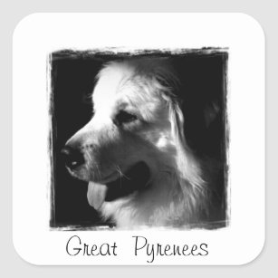 Great Pyrenees Black and White Photo products Square Sticker