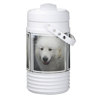 Great Pyrenees Drinks Cooler