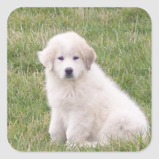 Great Pyrenees Sticker