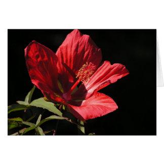 Great Red hibiscus (Hibiscus coccineus) card