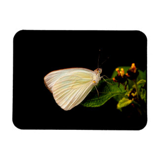 Great Southern White on green leaves Rectangular Photo Magnet