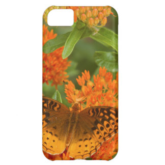 Great Spangled Fritillaries on Butterfly Milkweed iPhone 5C Case
