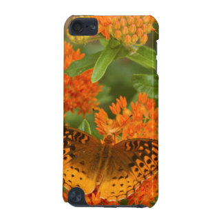 Great Spangled Fritillaries on Butterfly Milkweed iPod Touch (5th Generation) Cover