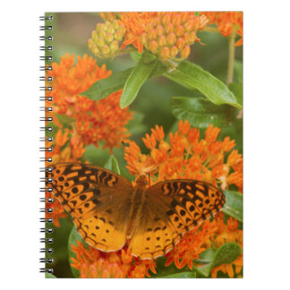 Great Spangled Fritillaries on Butterfly Milkweed Notebook
