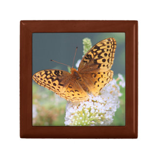 Great spangled fritillary butterfly small square gift box