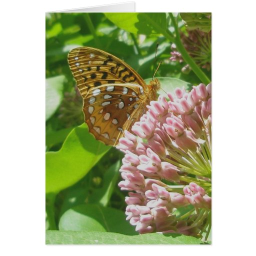 Great Spangled Frittilary Note Card