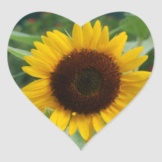 Great Sunflower Heart Sticker