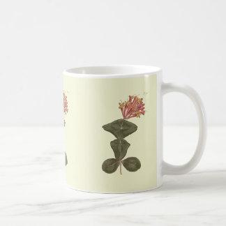 Great Trumpet Honeysuckle Botanical Illustration Coffee Mug