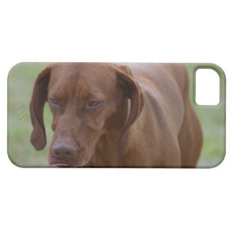 Great Vizsla Dog Case For The iPhone 5
