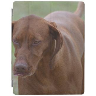 Great Vizsla Dog iPad Cover