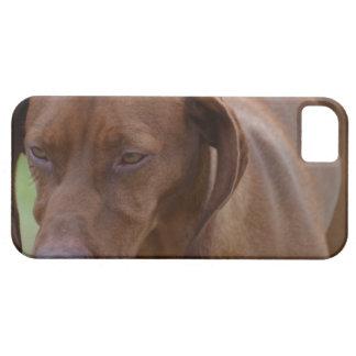 Great Vizsla Dog iPhone 5 Cases