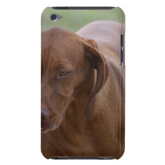 Great Vizsla Dog iPod Touch Covers