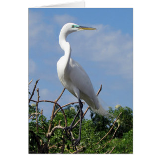Great White Egret (0848) Card