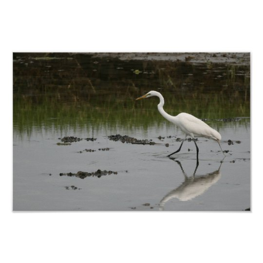 Great White Egret Print